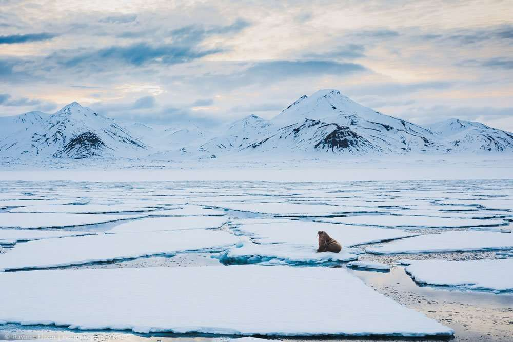 svalbard photography tour and workshop